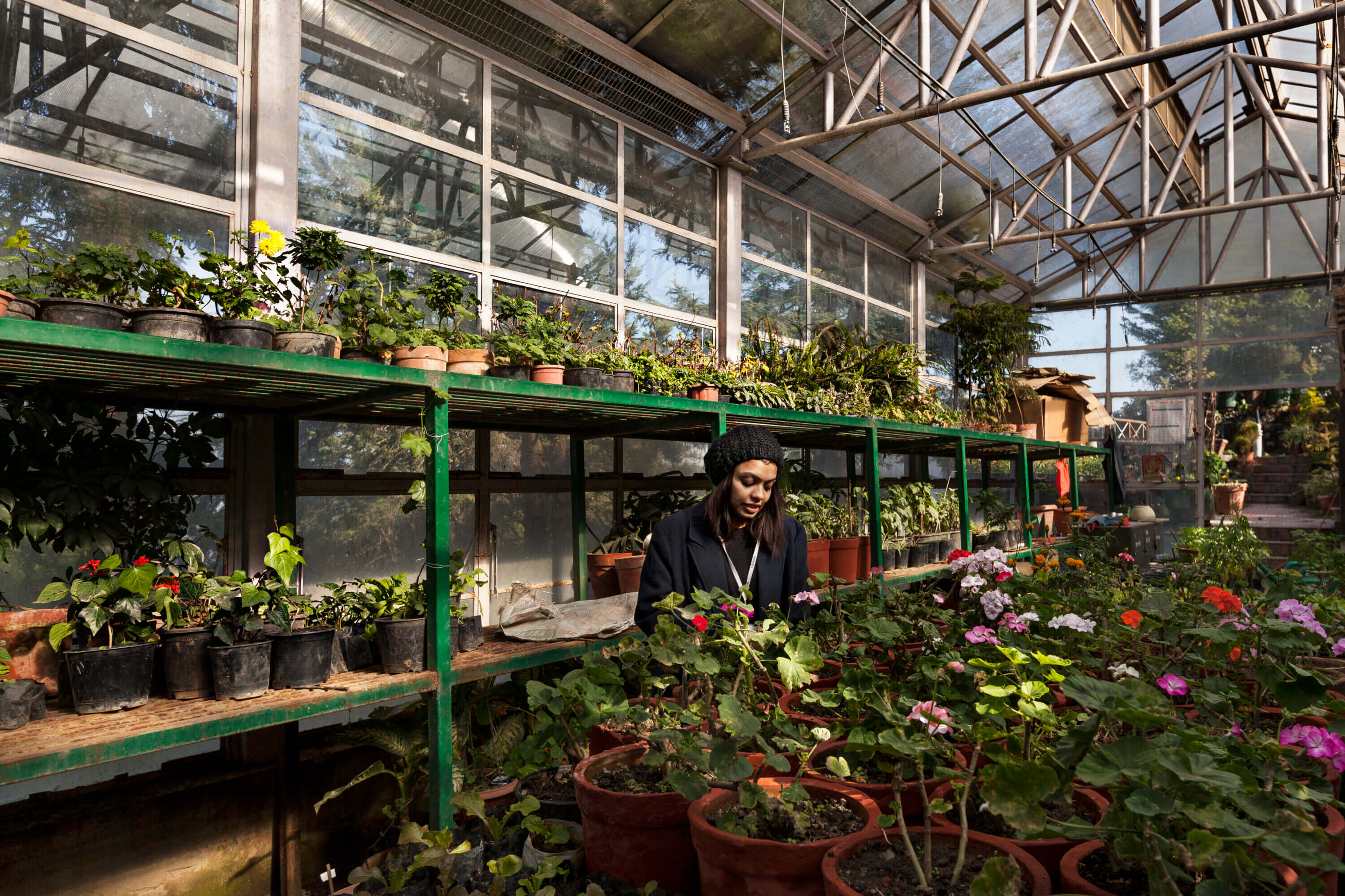 Journalist Sonali Prasad is surrounded by lush green plants and looking towards one of them