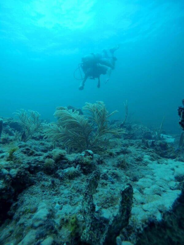 An underwater image of a scuba diver tracking coral ref health from Project RE(ef)SOURCE