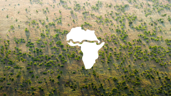 An 8000 km tree stretch in Africa is underway to fight climate change: The Great Green Wall
