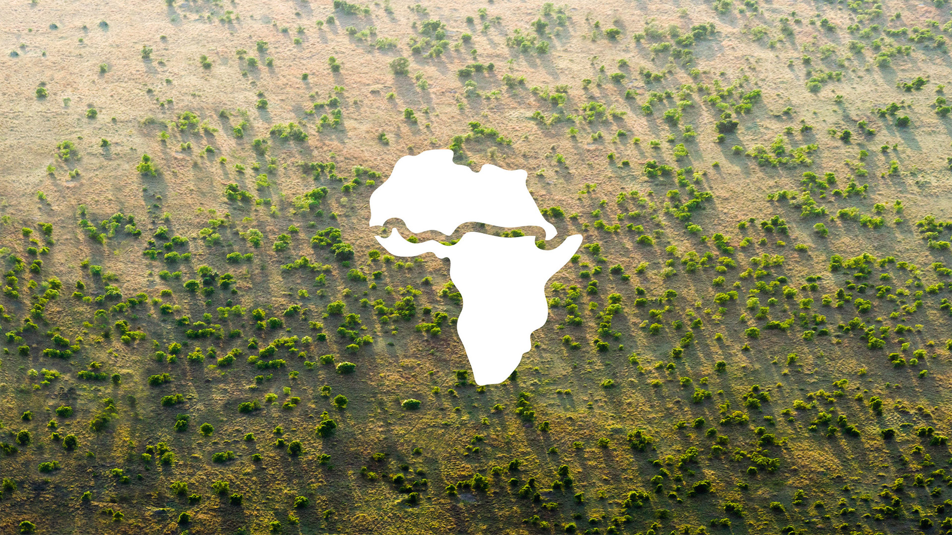 An image of a lot of trees with a the logo of the great green wall on top