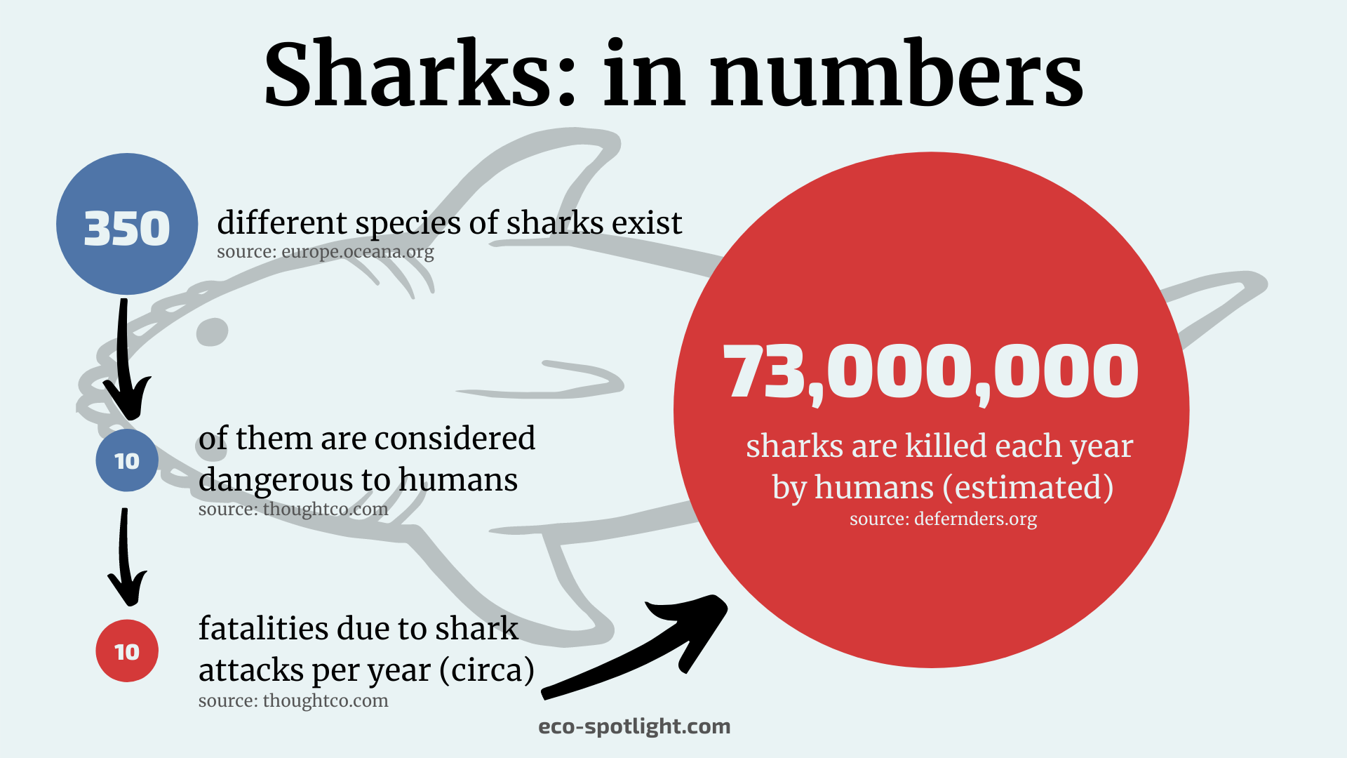 Statistic on the number of shark species