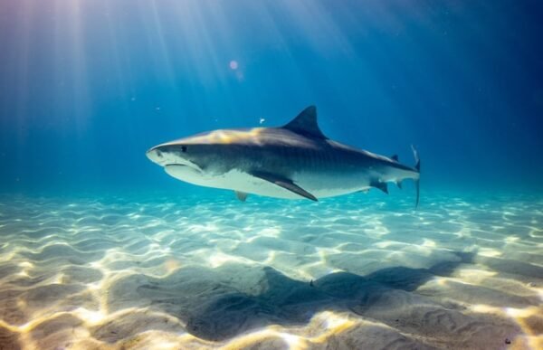 The cycle of life: sharks' importance for a healthy marine eco-system
