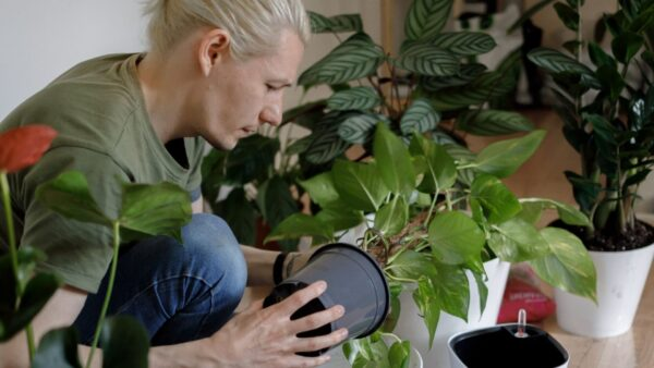 A complete guide to Urban Gardening for beginners (and how not to kill your plants)