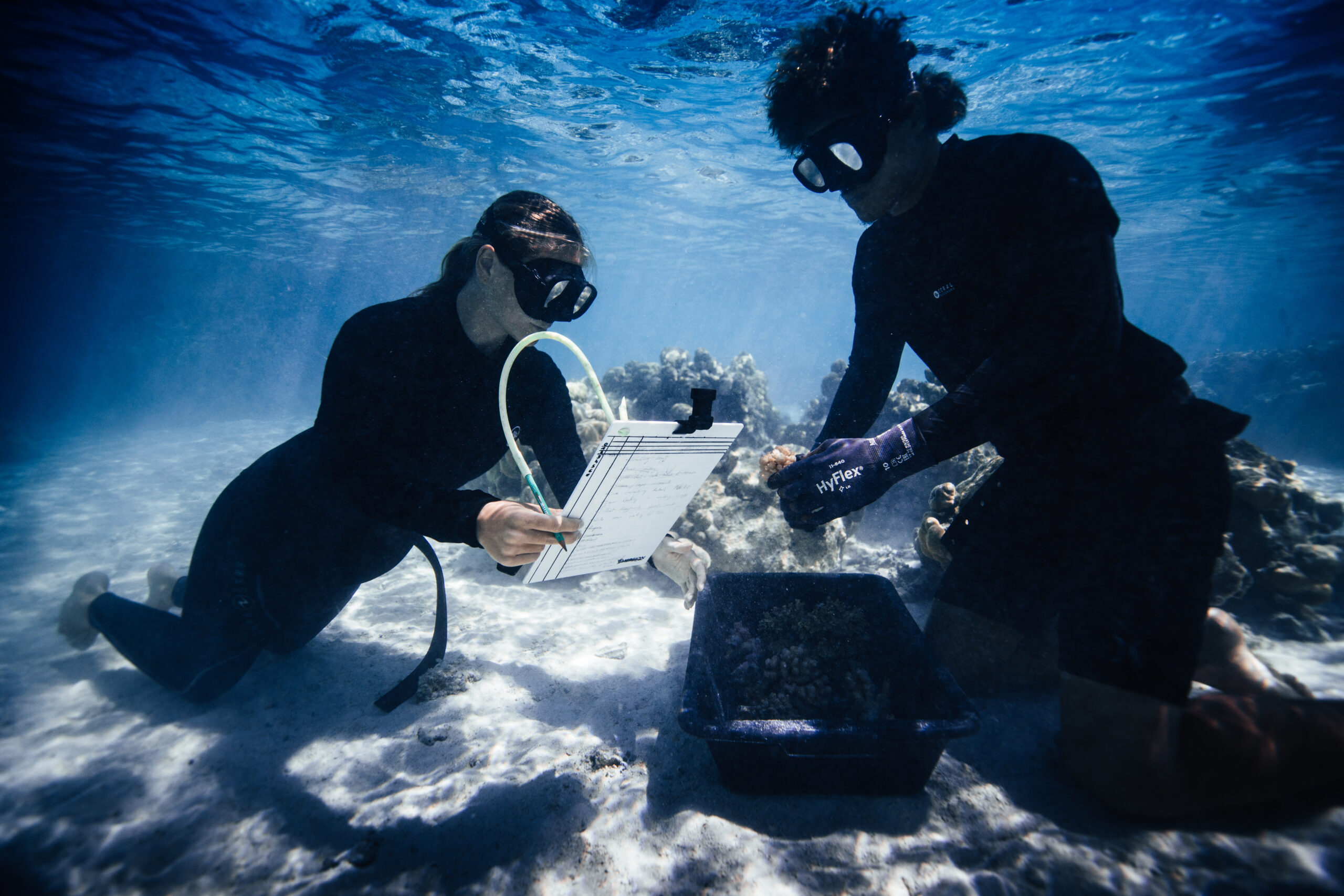 How the Coral Gardeners are saving the ocean's lungs